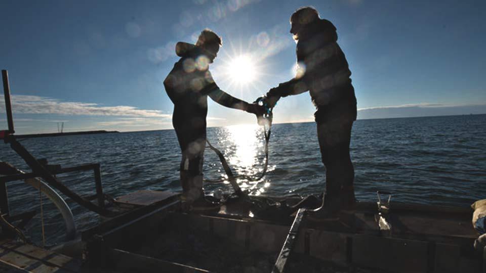 La pesca del oro
